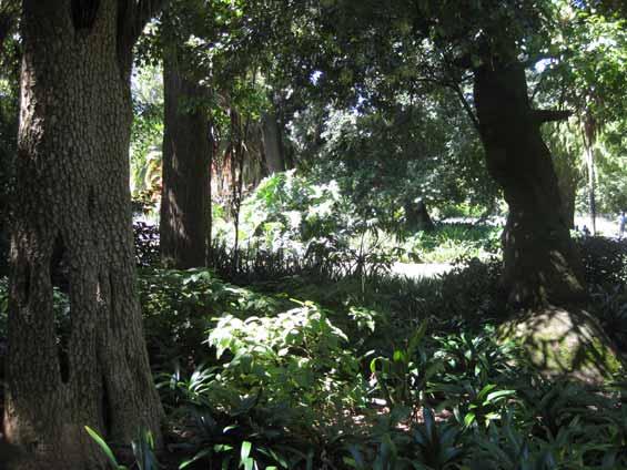 Company's Garden, Cape Town
